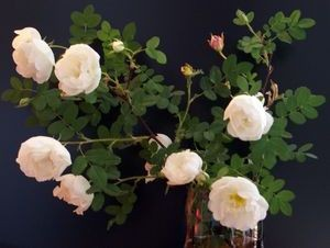 Приворот - роза любви