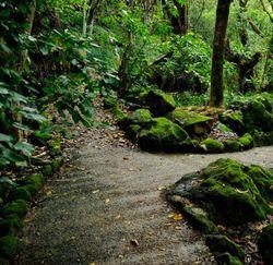 Перекресток лесных тропинок
